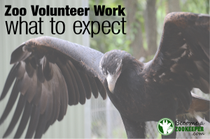 Zoo Volunteer Work – What to expect