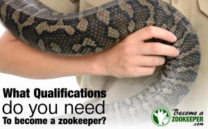 Zookeeper qualifications–what you need to know