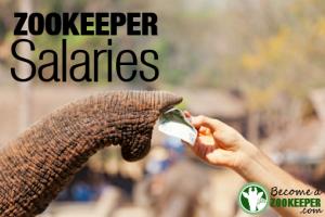 Zookeeper Salaries