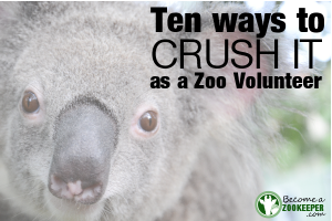 Ten Ways to Crush It as a Zoo Volunteer