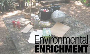 What is Environmental Enrichment?