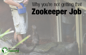 Why you're not getting that zookeeper job