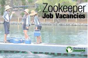 Where to find Zookeeper Job Vacancies