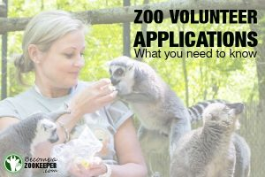 Zoo volunteer applications–what you need to know