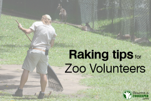 Raking tips for zoo volunteers: Raking is easy, right? Wrong!